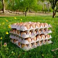 Eggs_wholesale