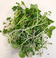 Alfalfa__broccoli__red_clover